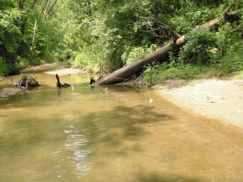 <p>Center line on Banner Creek along which perpendicular transects are placed for taking sediment measurements.</p>