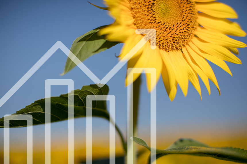 Sunflower against blue sky with financial graph superimposed over top